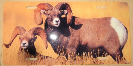 Big Horn Sheep Plate